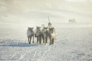 Ein unvergessliches Event für Ihr Team. Abenteuerliche Firmen Reise nach Lappland.