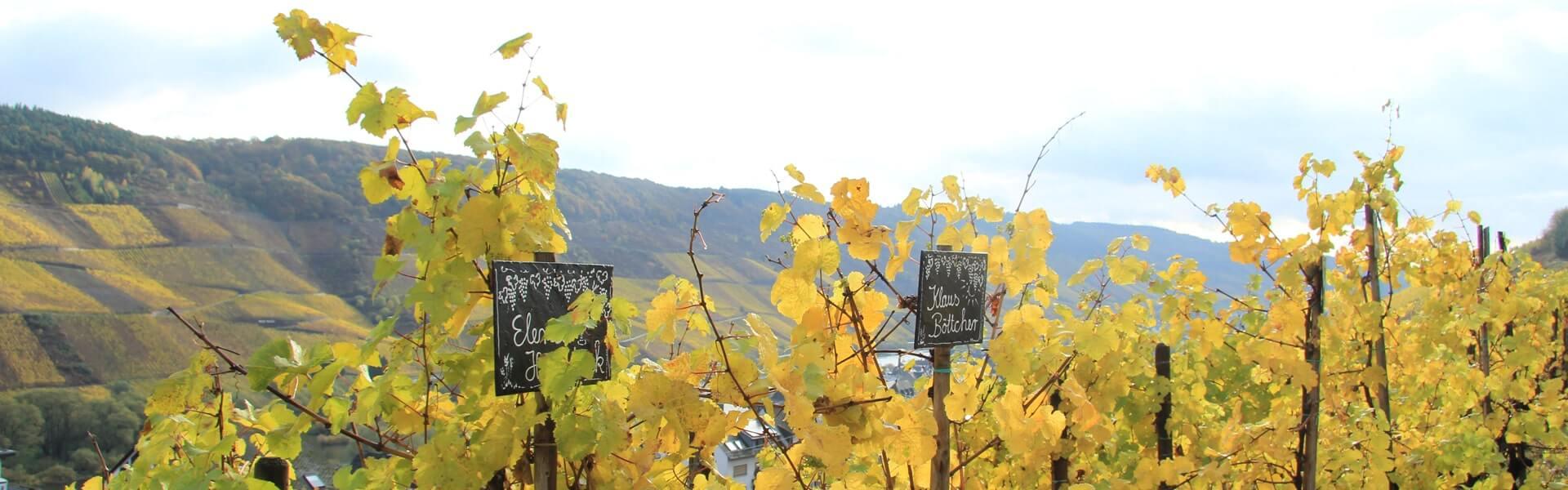 Weinwanderung in Deutschlands schönsten Weinregionen als aktiven und kulinarische Betriebsausflug Idee von b-ceed