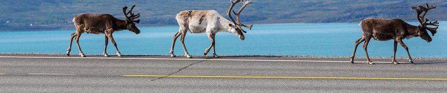 Lappland Incentive Reise - Expedition zum Polarkreis mit Weihnachtsdorf und Rentieren