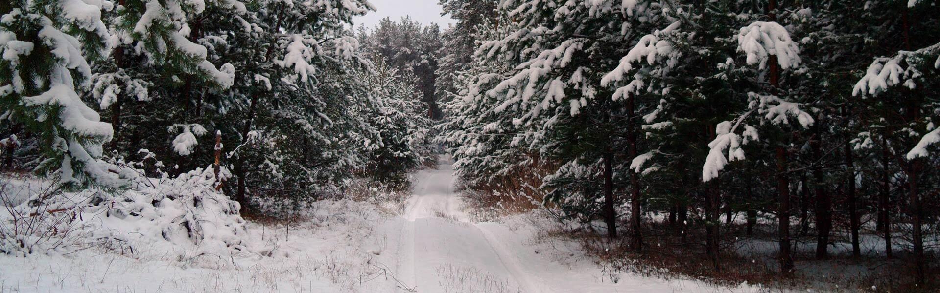 Christbaumschonung mit Tannenbaumschlagen als Weihnachtsfeier Idee b-ceed events