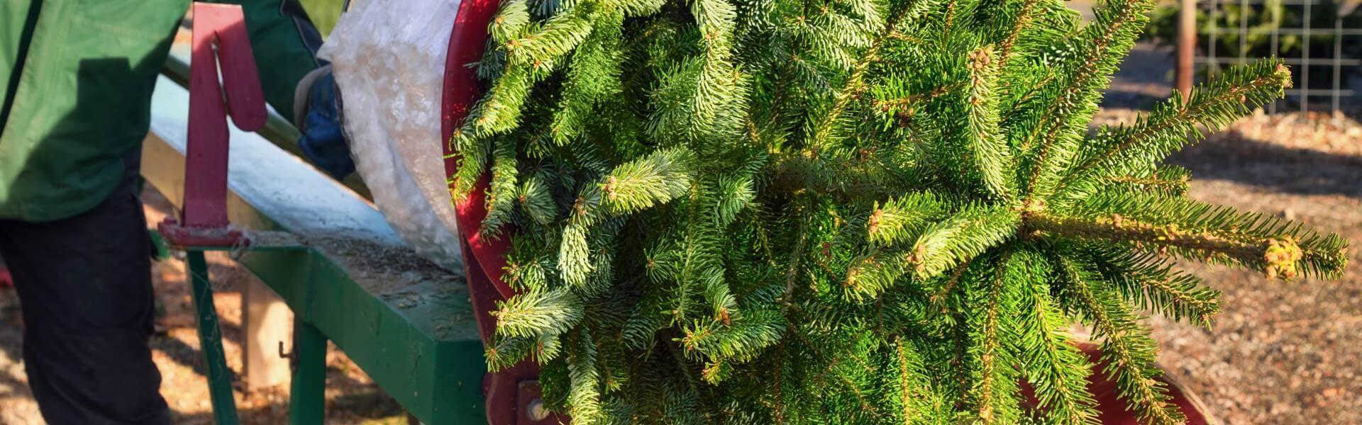 Tannenbaumschlagen auf dem Firmengelände als mobile Weihnachtsfeier Idee b-ceed events