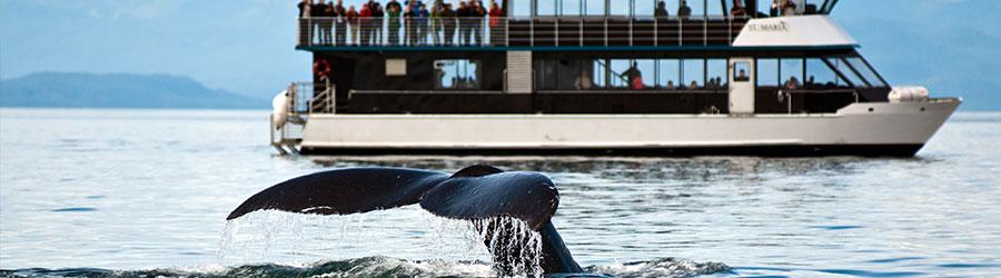 Walbeobachtung mit dem Boot auf der Abenteuer Incentive Reise Island | b-ceed travel