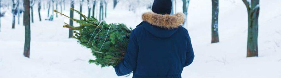 Aktives outdoor Weihnachts Event im Schnee: Tannenbaumschlagen