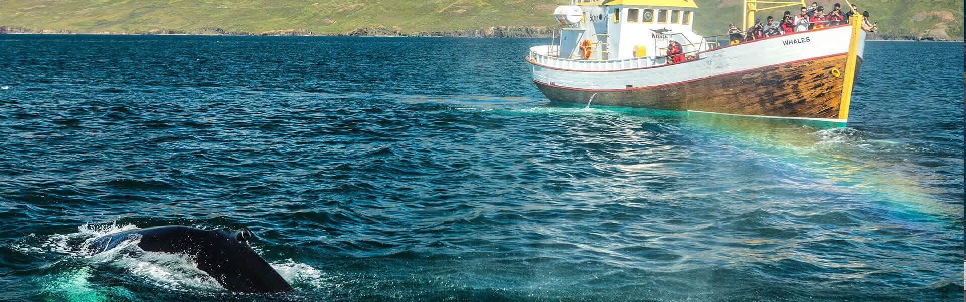 Wale beobachten auf der Firmenreise nach Island