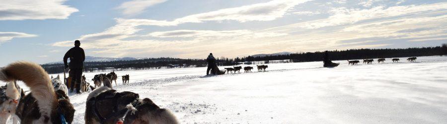 Firmenreisen und Incentive Reisen im Lappland mit b-ceed