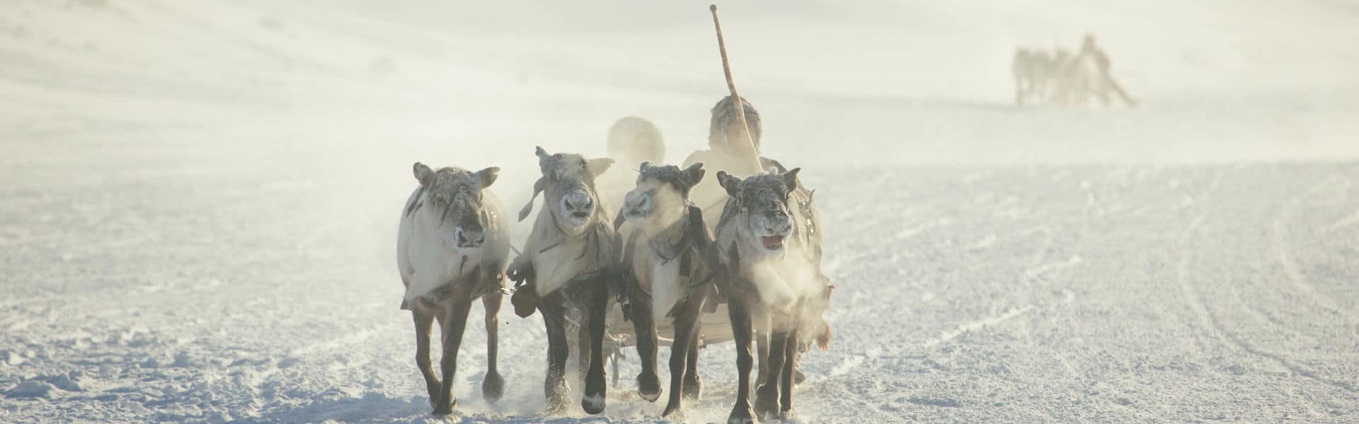 Incentive Expedition nach Lappland für Firmen mit Iglu Bau, Hundeschlitten Safari, Eis Hotel und Weihnachtsdorf