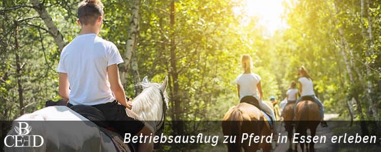 Betriebsausflug Essen Ruhrgebiet - Mit dem Pferd reiten im Team - b-ceed: events buchen