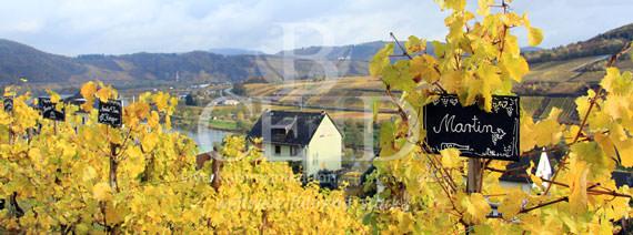 Betriebsausflug Weinwanderung - Religion der Reben: die Weinwanderung mit b-ceed: events als Betriebsausflug