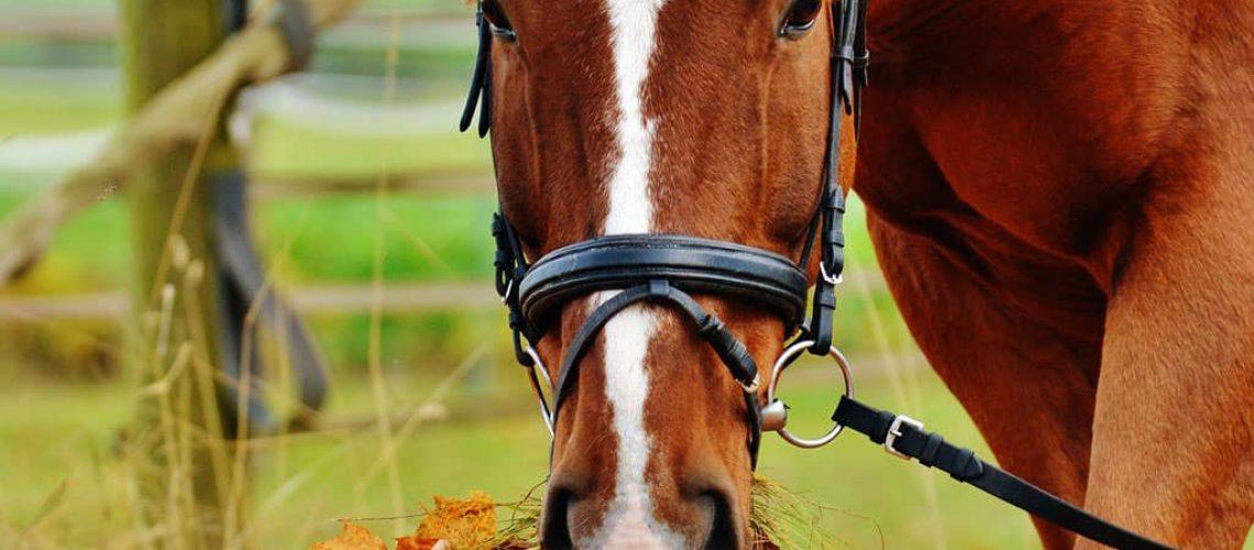 eifel wandern mit Pferd und betriebsausflug in der eifel zu pferd oder zu fuß | b-ceed events